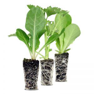 Plantas en Cepellón