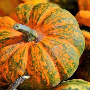 pumpkin, fruit, orange