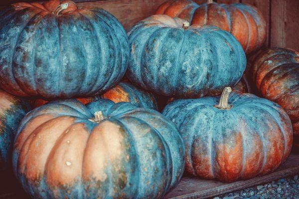pumpkin, squash, vegetables